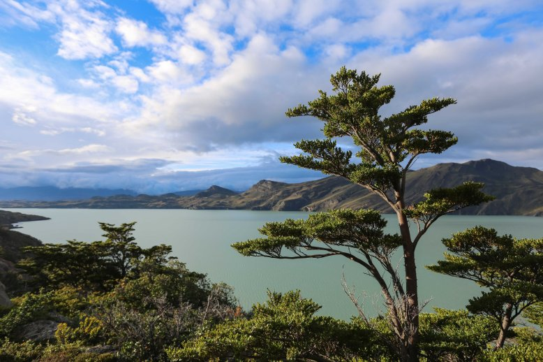 Torres Del Paine_201