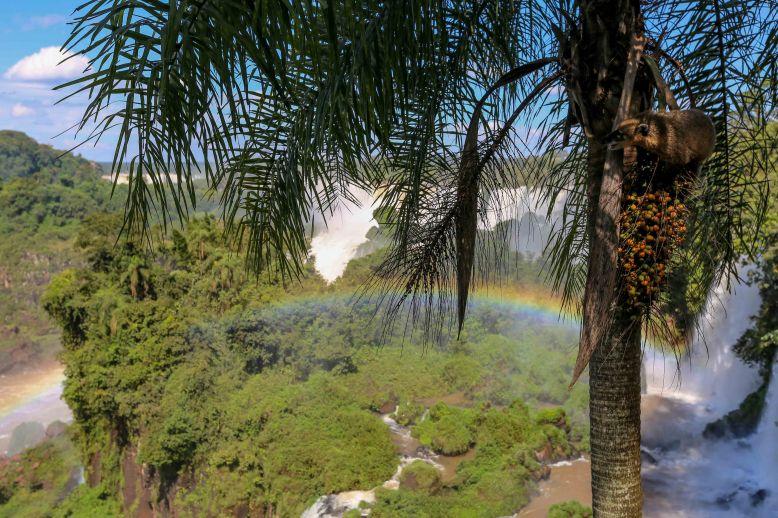 Iguazu Falls_150
