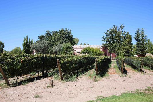 Mendoza_186