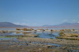 Salt Flat Tour_049