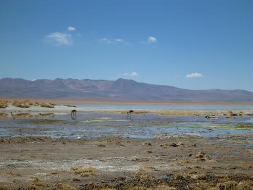 Salt Flat Tour_050