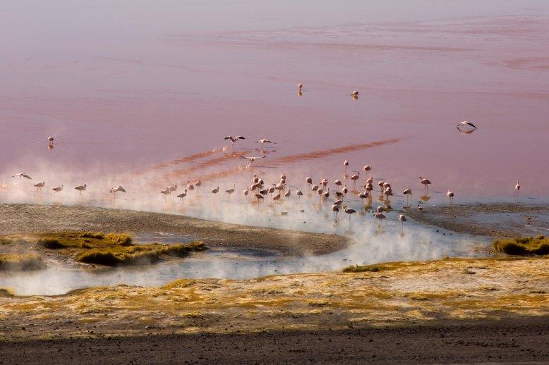 Salt Flat Tour_081