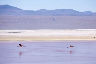 Salt Flat Tour_091