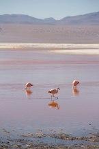 Salt Flat Tour_092