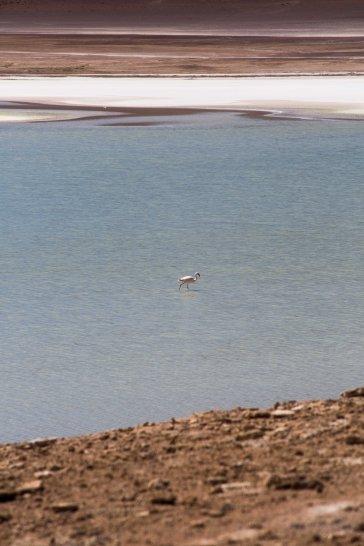 Salt Flat Tour_146