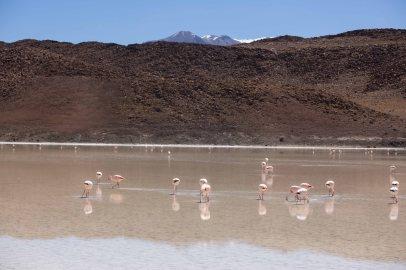 Salt Flat Tour_149