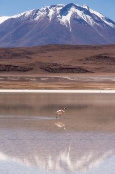 Salt Flat Tour_154