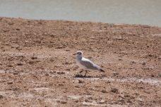 Salt Flat Tour_156