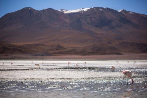 Salt Flat Tour_187
