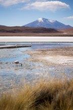 Salt Flat Tour_192
