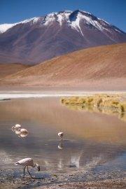 Salt Flat Tour_194