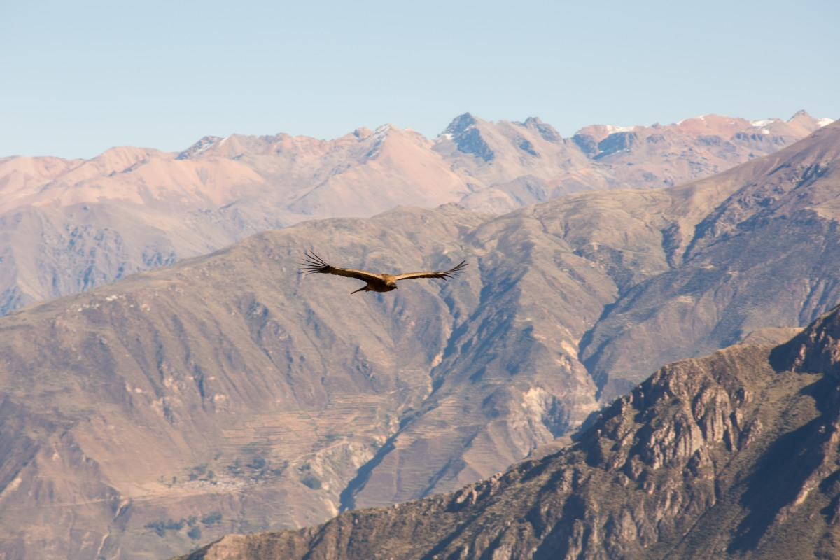 Arequipa & Colca Canyon_016