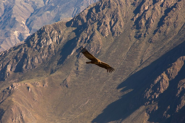 Arequipa & Colca Canyon_017