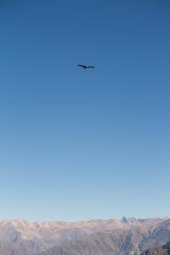 Arequipa & Colca Canyon_022