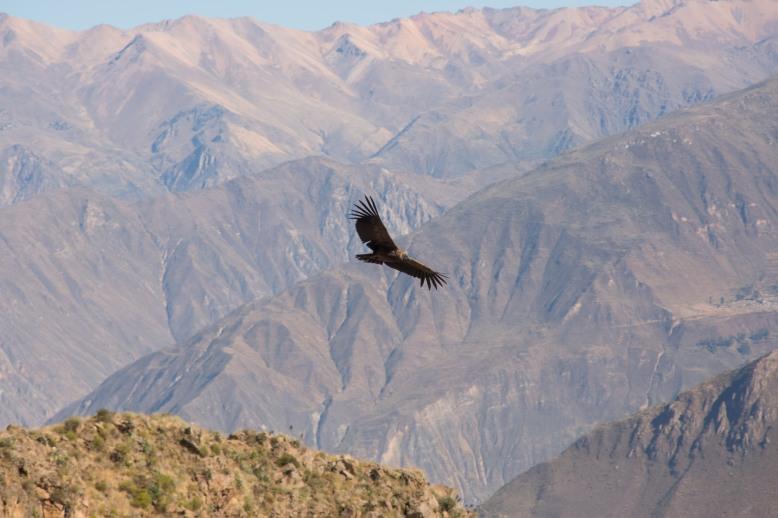 Arequipa & Colca Canyon_023