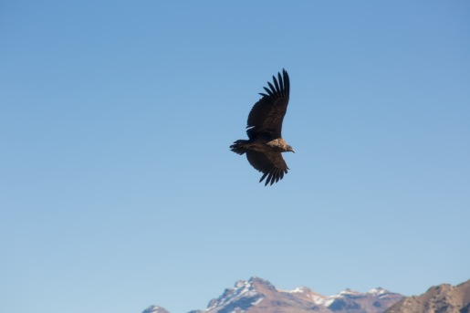 Arequipa & Colca Canyon_025