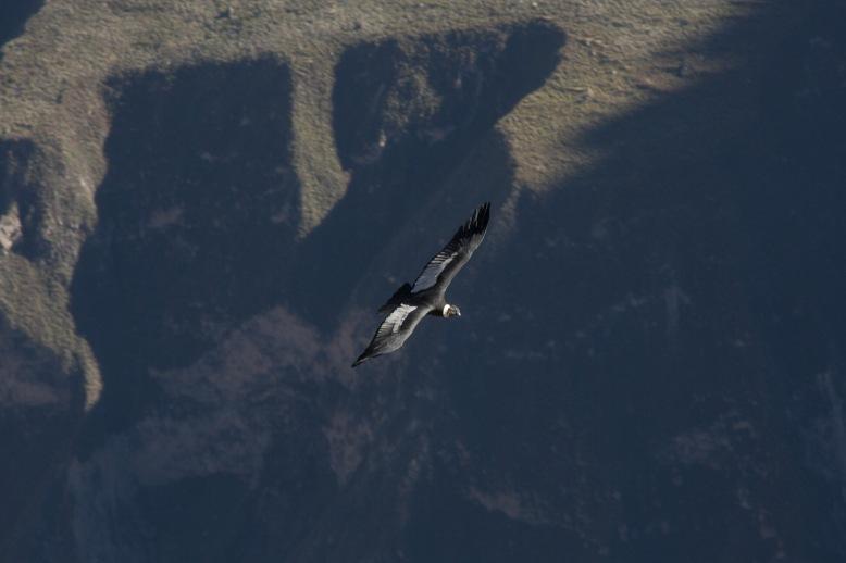 Arequipa & Colca Canyon_026