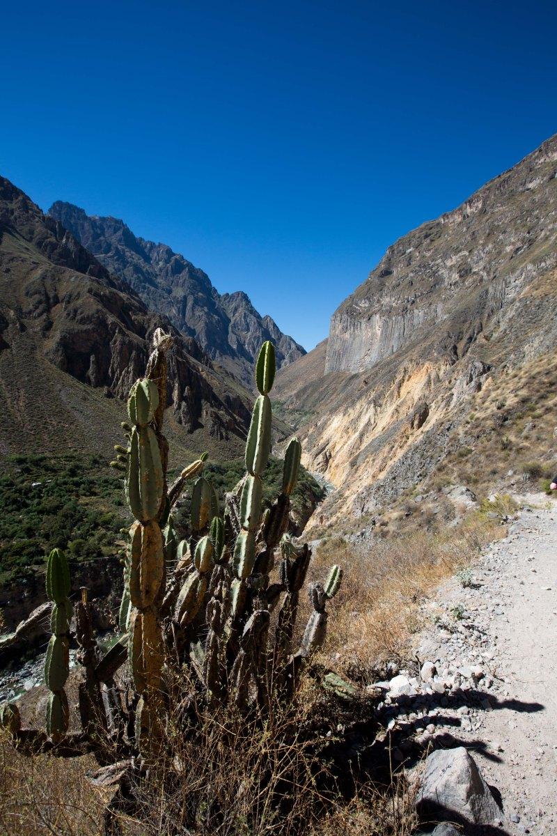 Arequipa & Colca Canyon_047