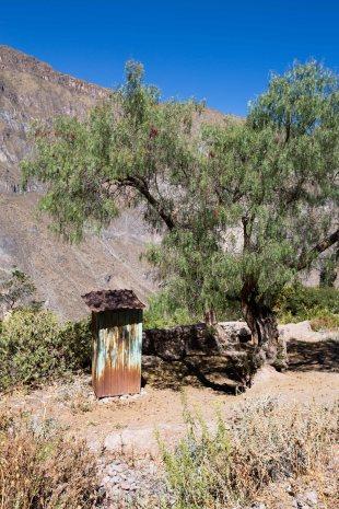 Arequipa & Colca Canyon_057