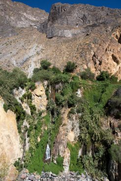 Arequipa & Colca Canyon_063
