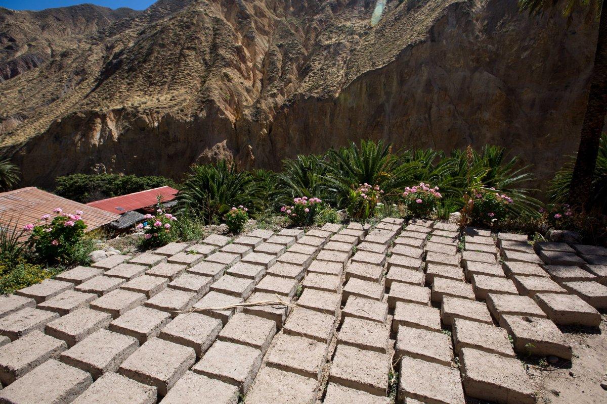 Arequipa & Colca Canyon_070