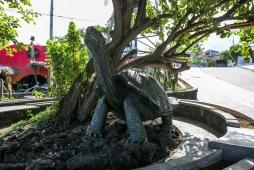 Galapagos_003