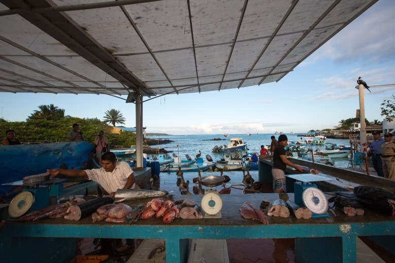 Fishmongers on the marina - Santa Cruz, Galapagos