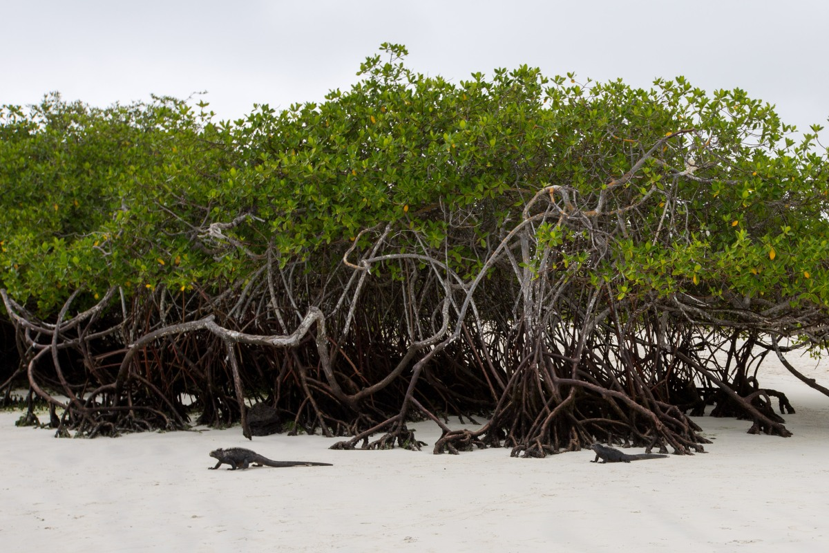 Galapagos_013