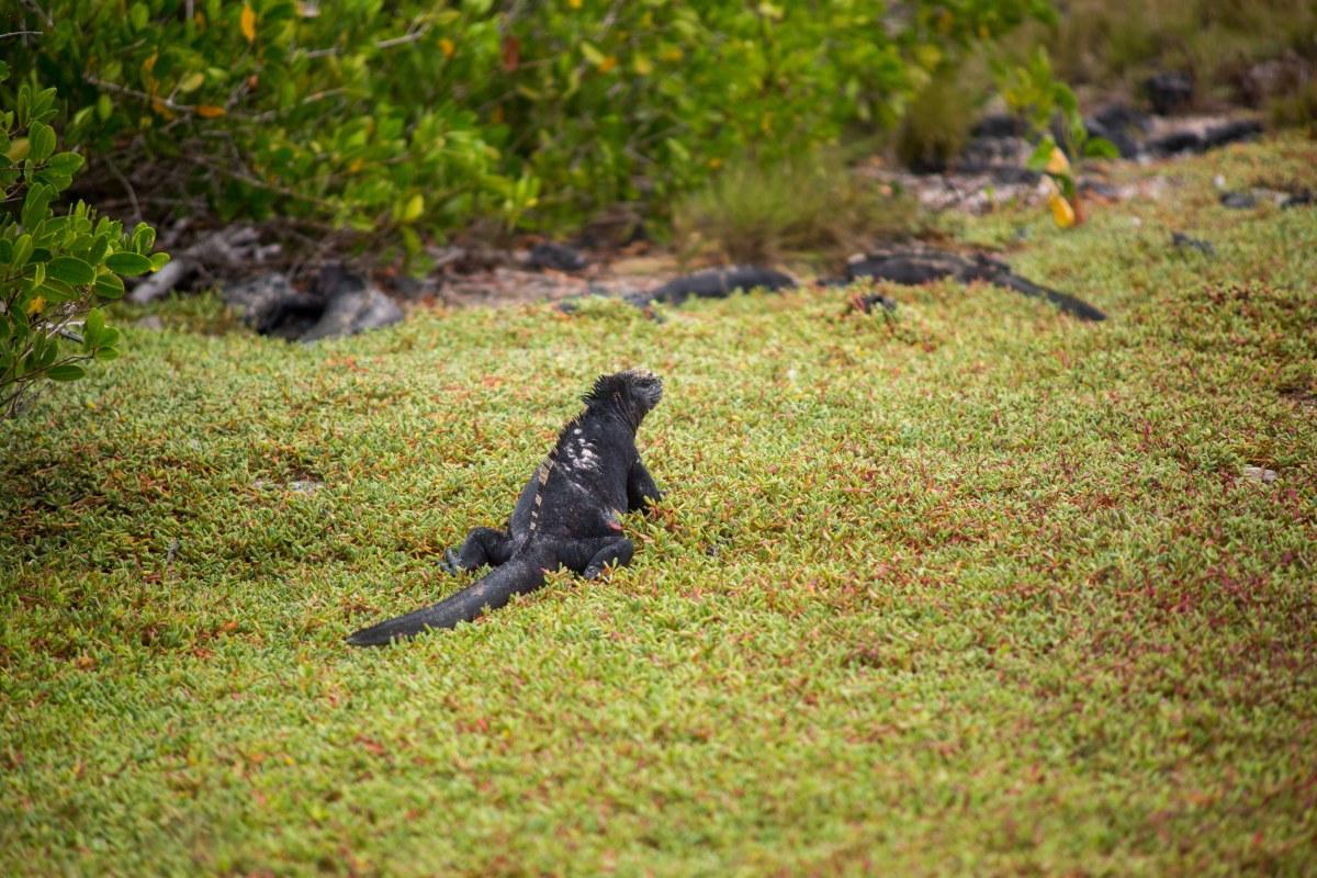 Galapagos_014