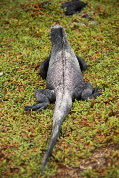 Galapagos_017