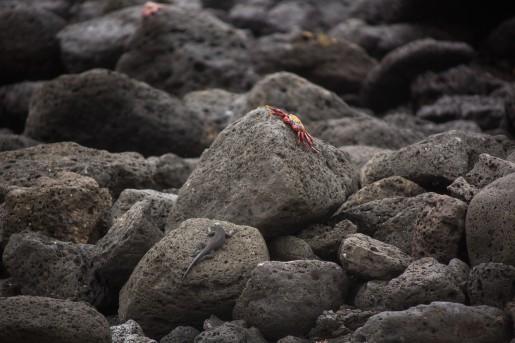 Galapagos_020