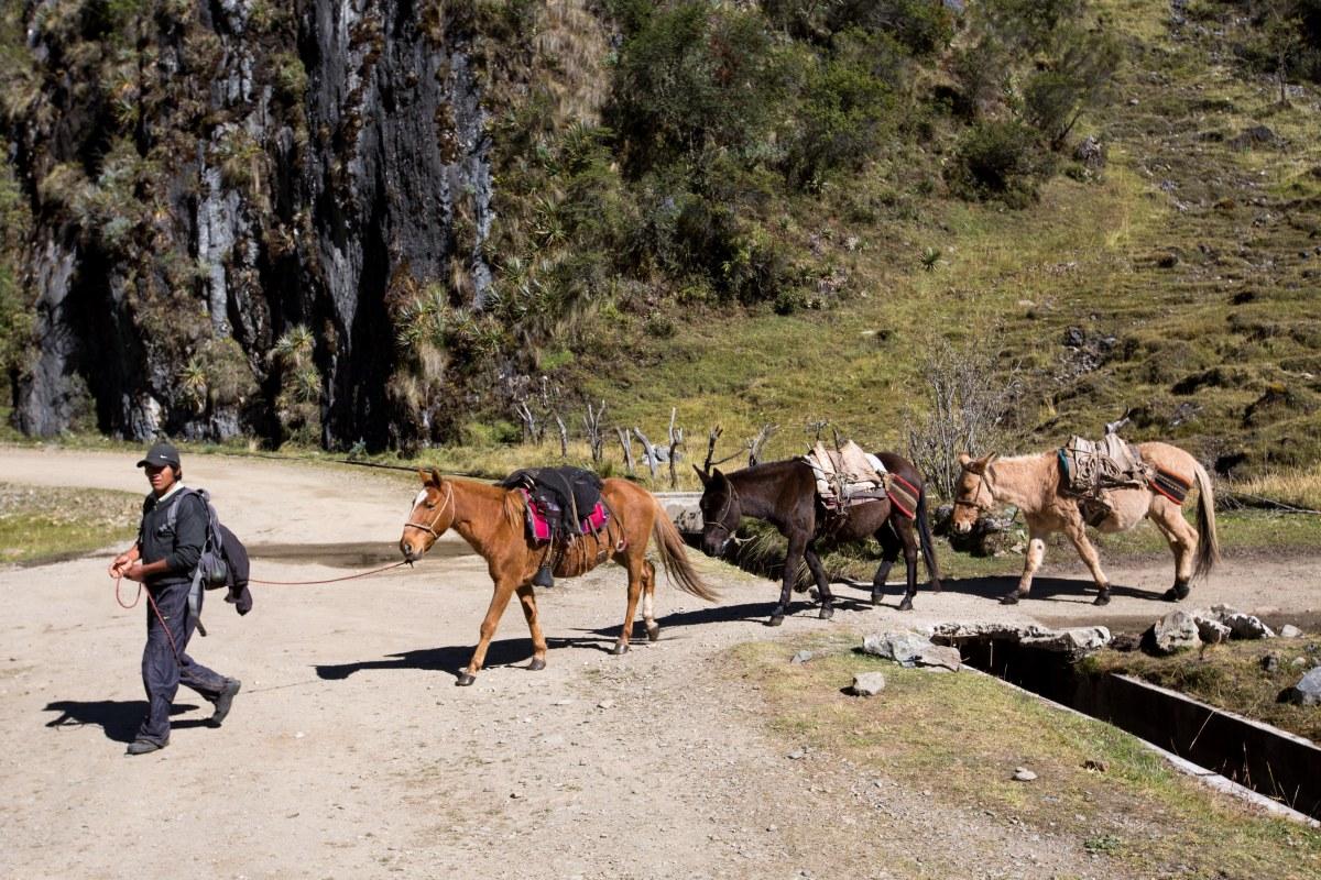 Machu Picchu_014
