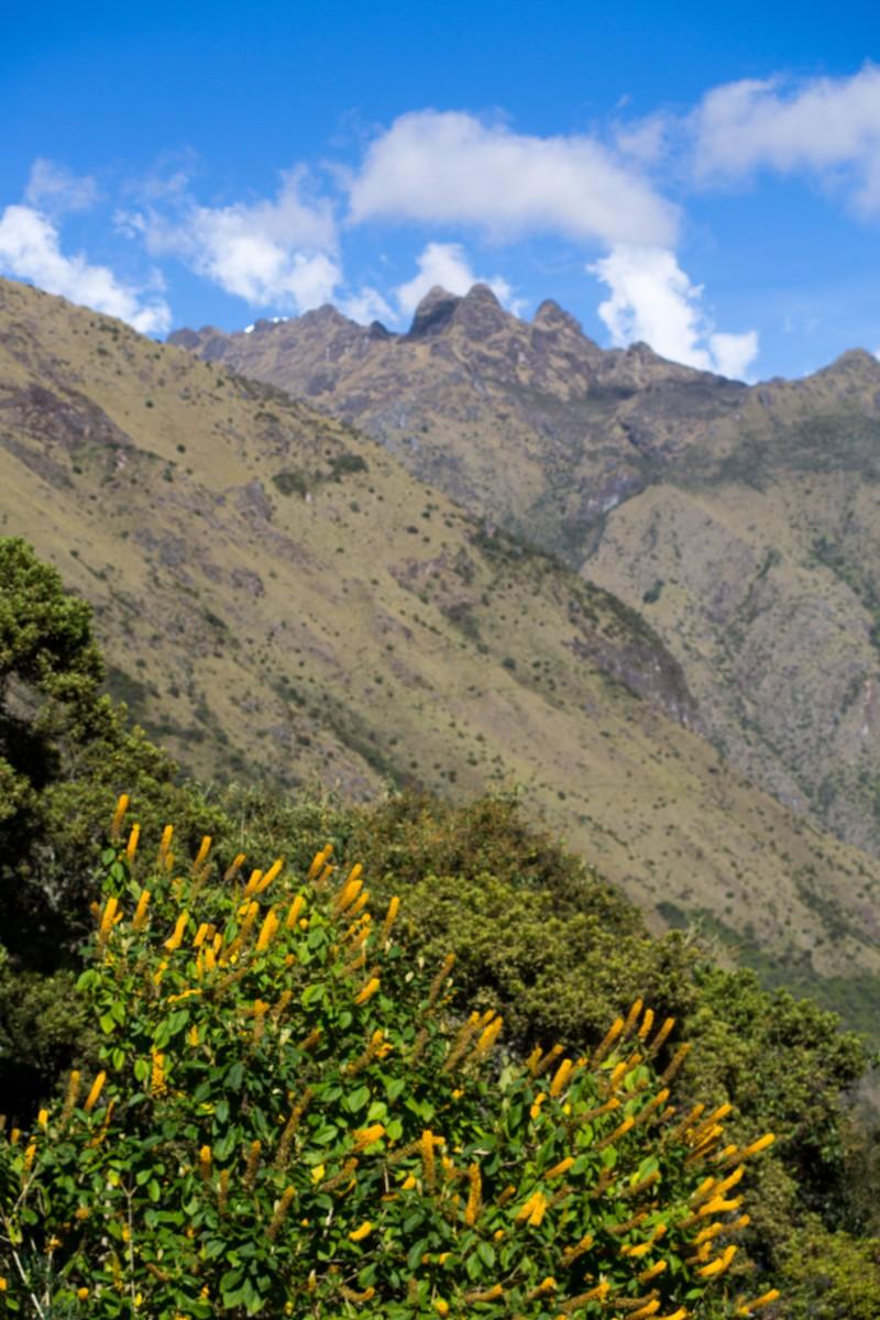 Machu Picchu_125