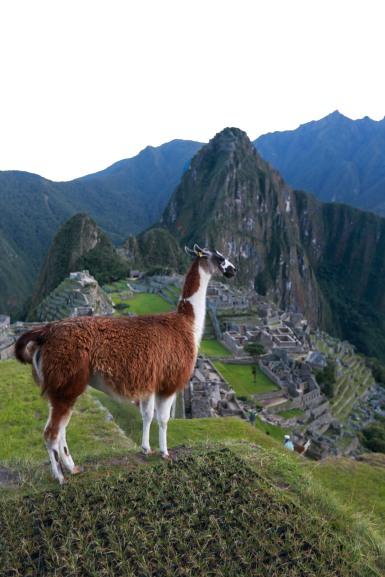 Machu Picchu_194