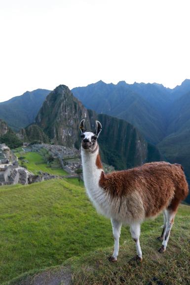 Machu Picchu_195