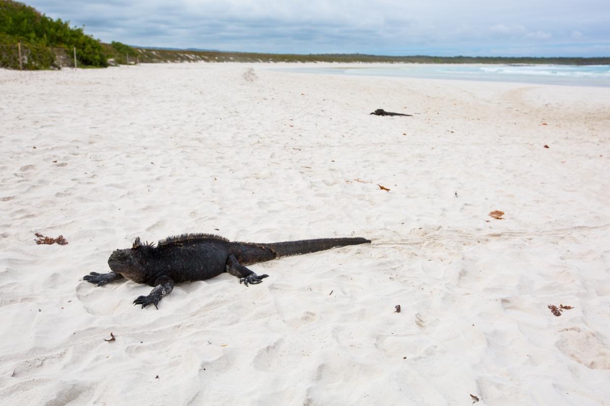 Galapagos_037