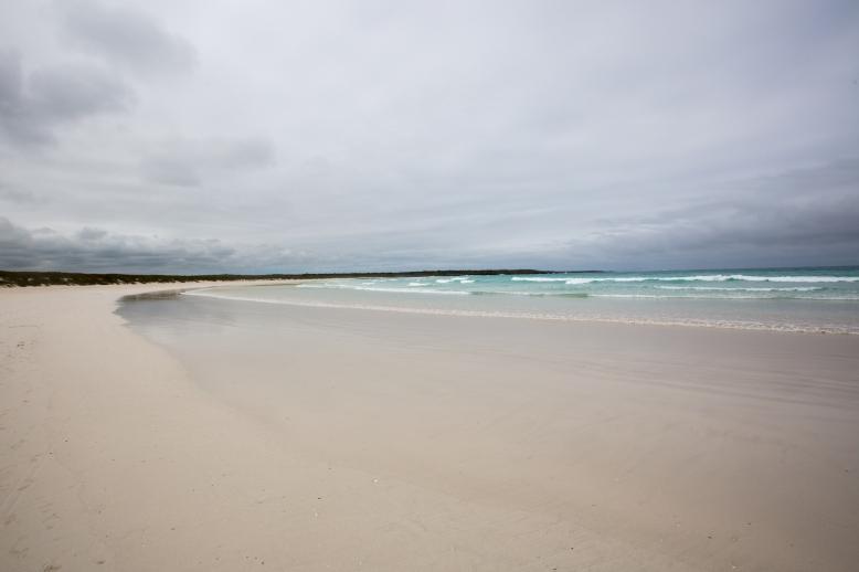 Beach near Tortuga Bay