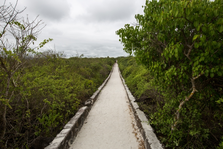 Path to Tortuga Bay, Galapagos
