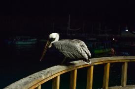 Galapagos_055