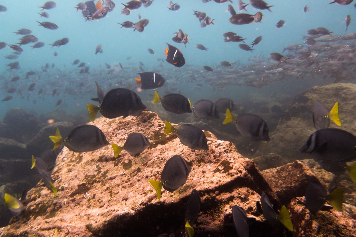 Galapagos_068