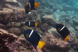 Galapagos_071