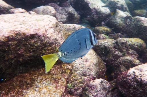 Galapagos_073
