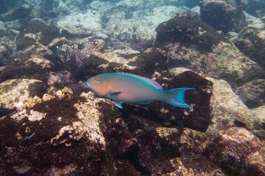 Galapagos_074