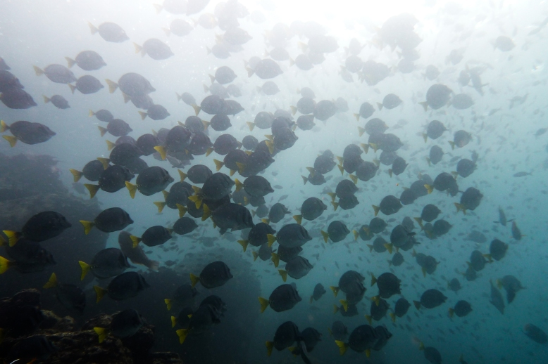 Galapagos_076