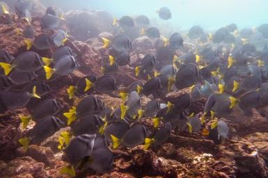 Galapagos_077