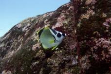 Galapagos_078