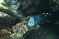 Galapagos_082