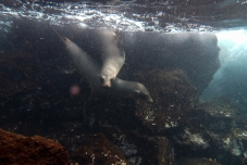 Galapagos_084