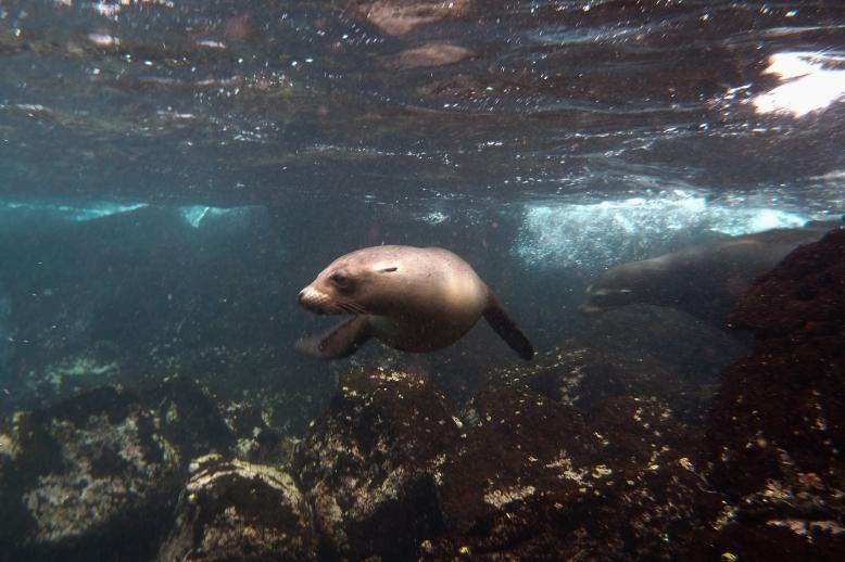 Galapagos_085