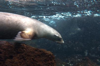 Galapagos_086